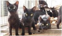 Schwarze Kätzchen