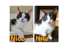 Nico & Nita