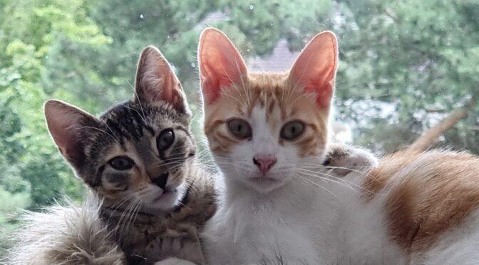 Lexi & Cleo (Vermittlungshilfe)