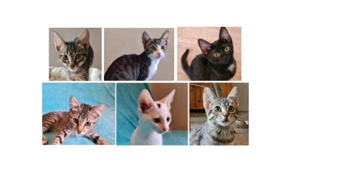 Kitten-Club
